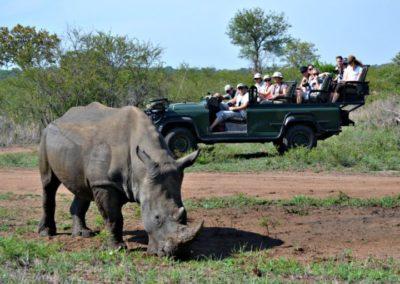 jeep-behind-rhino